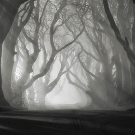 The Dark Hedges, Northern Ireland 2016