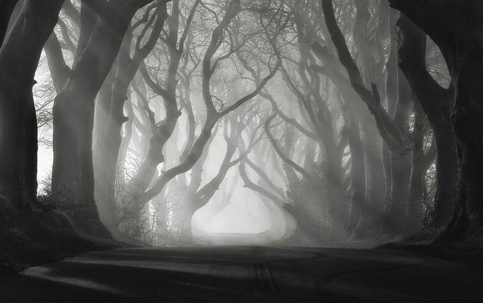 Rays Of Light by carstenmeyerdierks - Mist And Drizzle Photo Contest