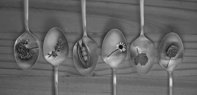 Spoon by Spoon by tuliosampayo - Commercial Shots Photo Contest 2018