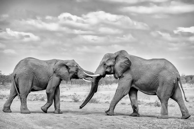 Tusk to Tusk by stumac - Explore Africa Photo Contest