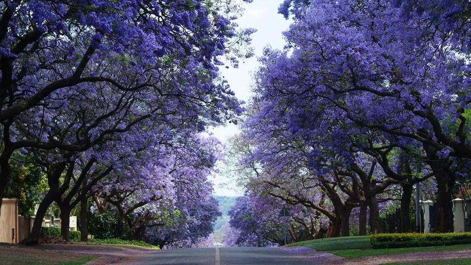 Beautiful Pretoria 2