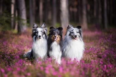 Three Forest Sprites