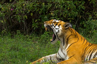 The-Roar - Beast of bandipur