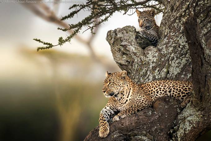 Looks in the savannah by albertoghizzipanizza - Explore Africa Photo Contest