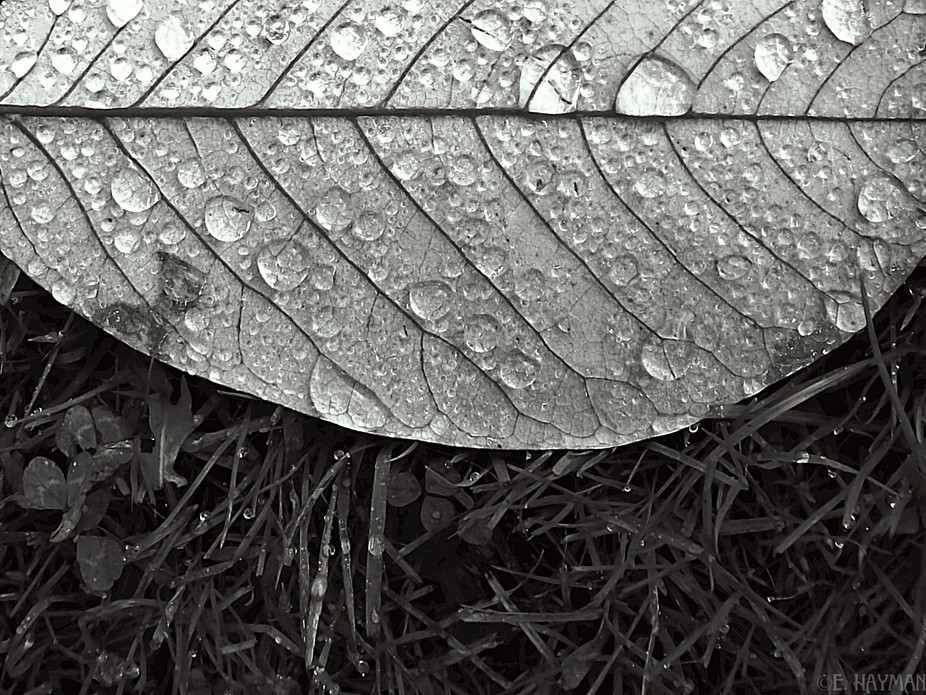 close up image of leaf covered in raindrops