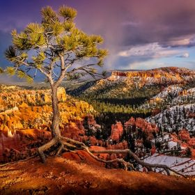 As we walked along the brim of Bryce Canyon, my wife noticed this tree; it drew her in. I almost passed it by except from her!   Nikon D300s 18mm...