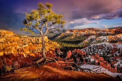 Gnarled Tree On The Precipice