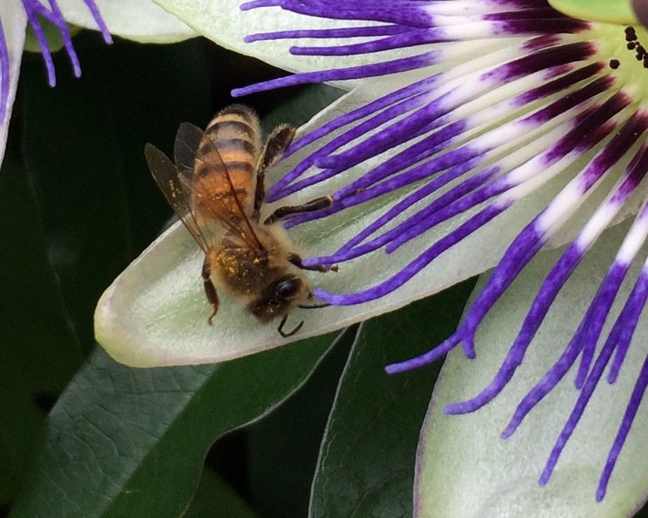 Close up Bee