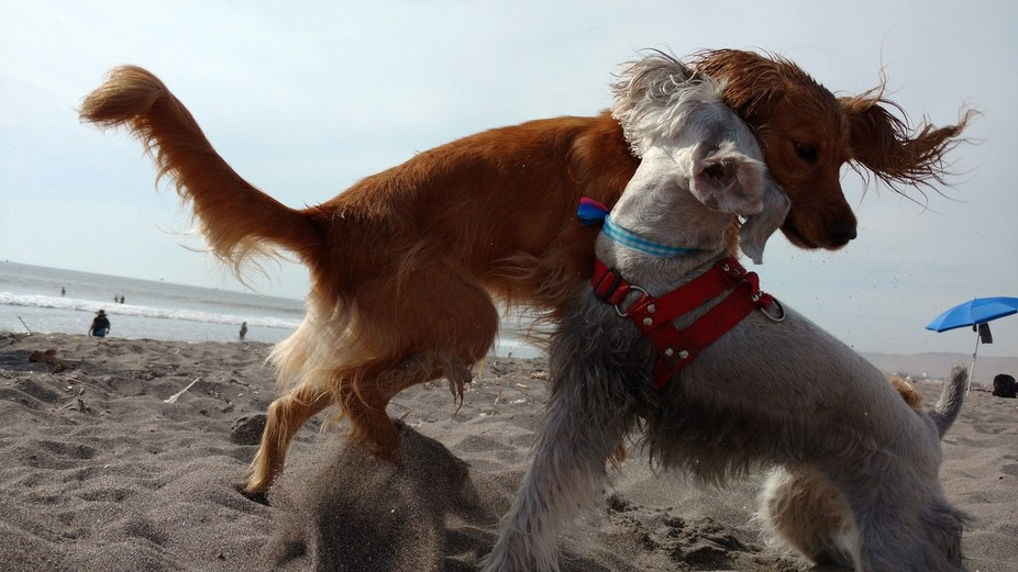 The family pets playing in the sand