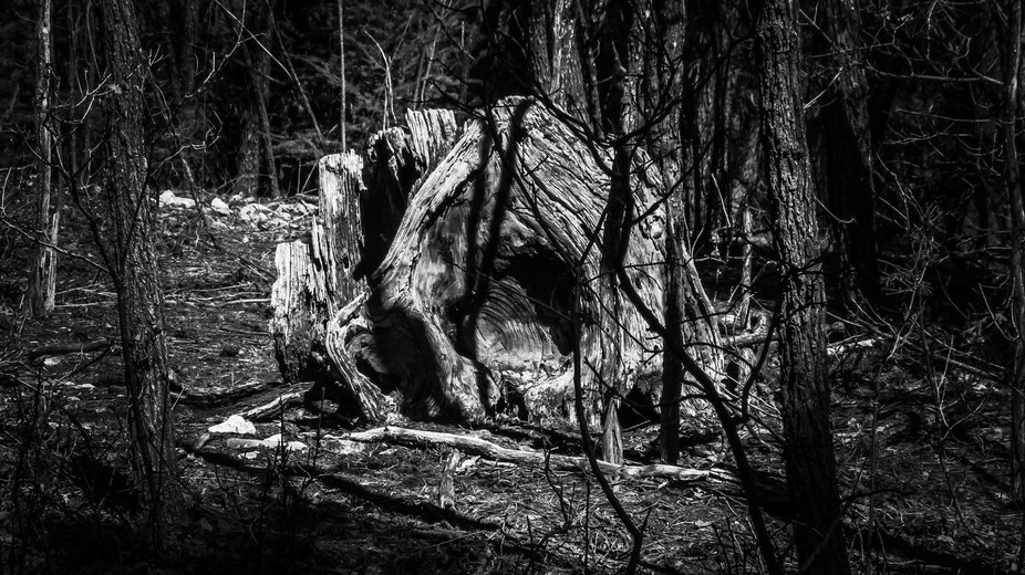Was taken during a hike, when I spotted this oddly shaped stump with interesting texture. When I ...