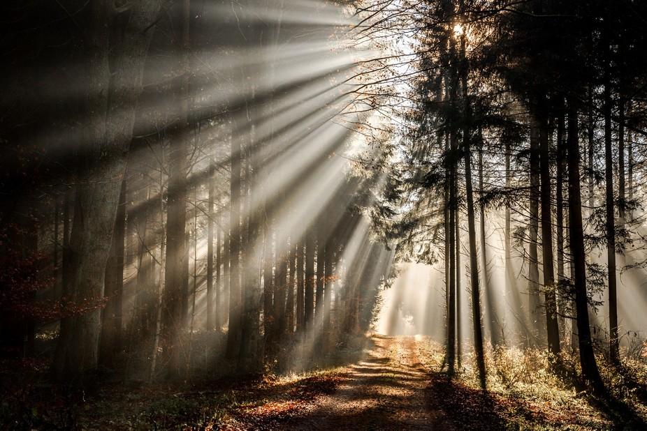 am frühen Morgen auf einem Spaziergang im Wald