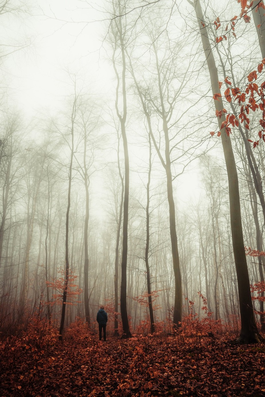 Desolate. by Matthiasdengler - Mist And Drizzle Photo Contest