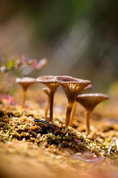 Mushroom vision