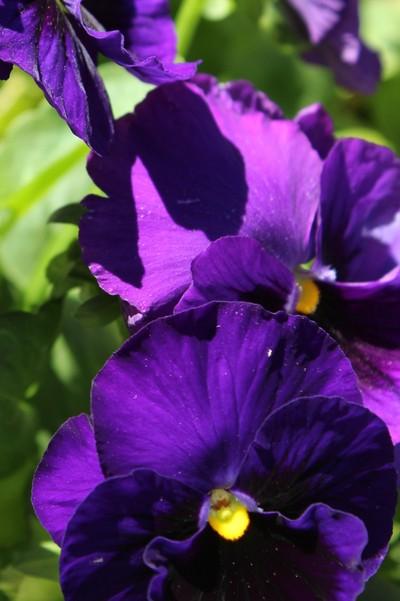 Purple Pop!