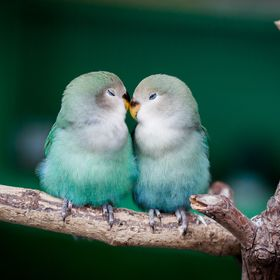 Two parrots in love in Paris.