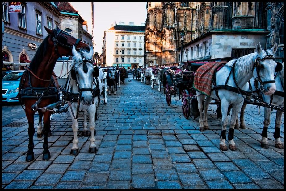 Vienna Horses 2
