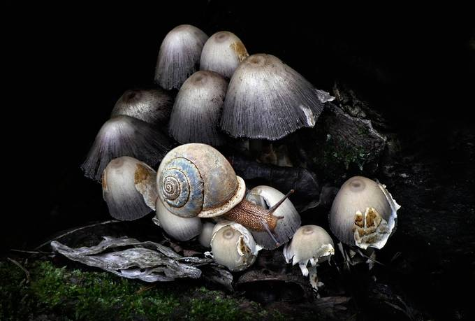 Forest Floor by clfowler - Mushrooms Photo Contest