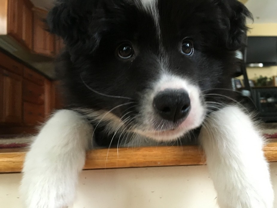 My sisters puppy