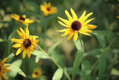 Summer Flowers!