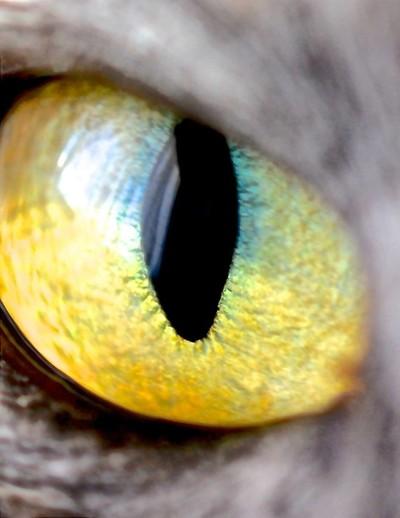 maze-eye