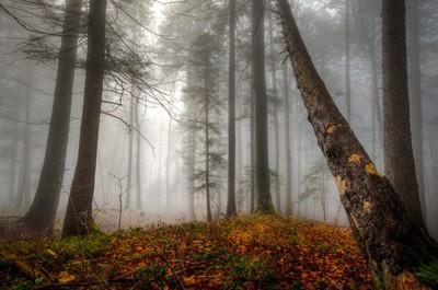 ich liebe diesen Bannwald