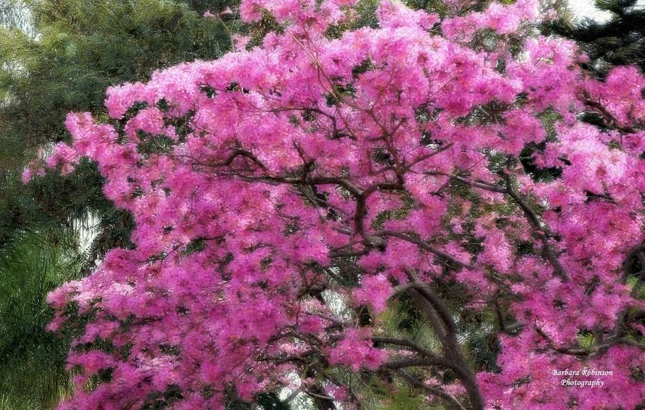 IMG_8394 Spring in Scottsdale, Arizona