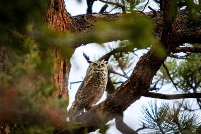 Skittish owl