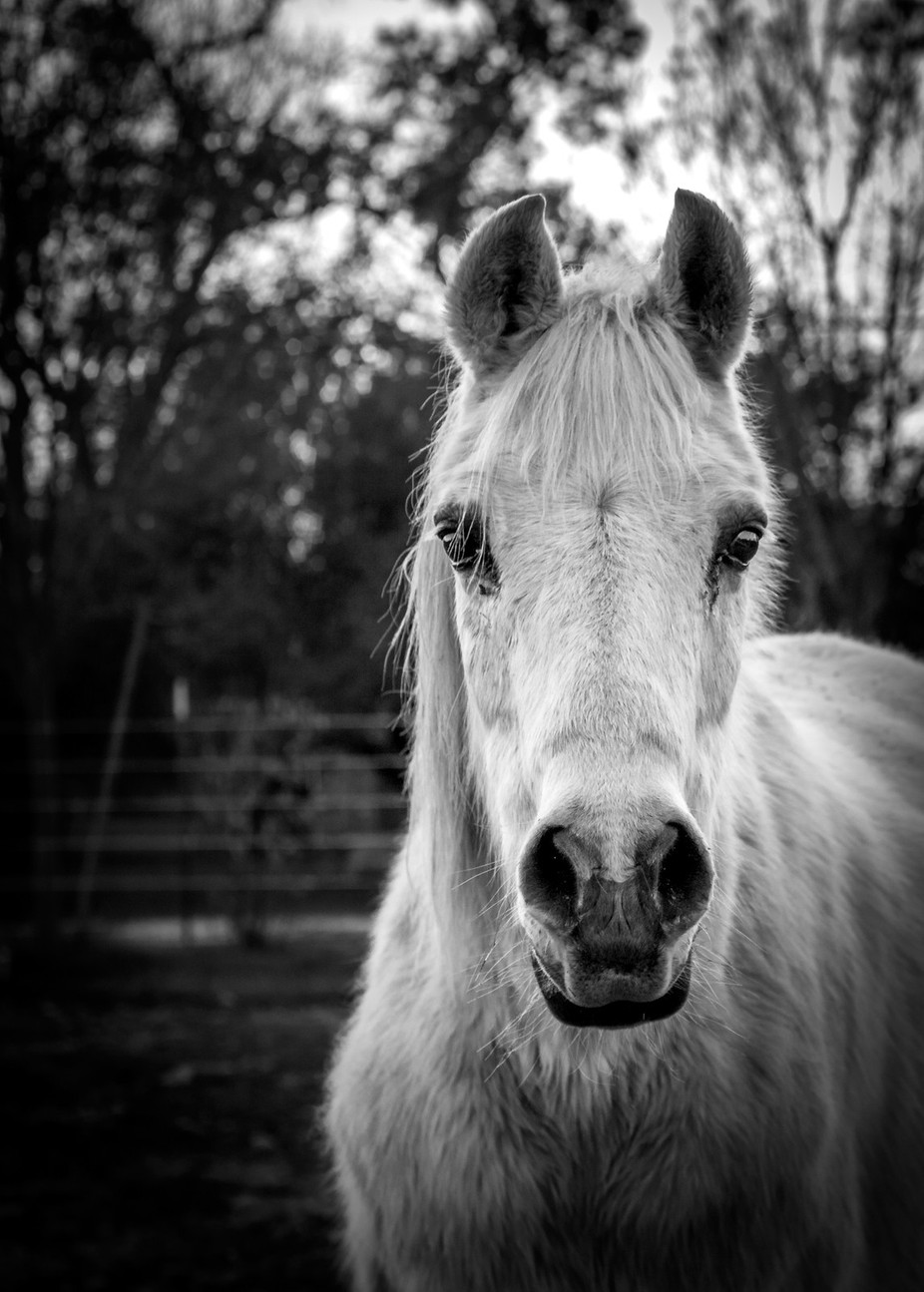 Pharroh by Jamie235 - Animals In Black And White Photo Contest