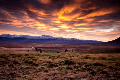 Morning in Iceland
