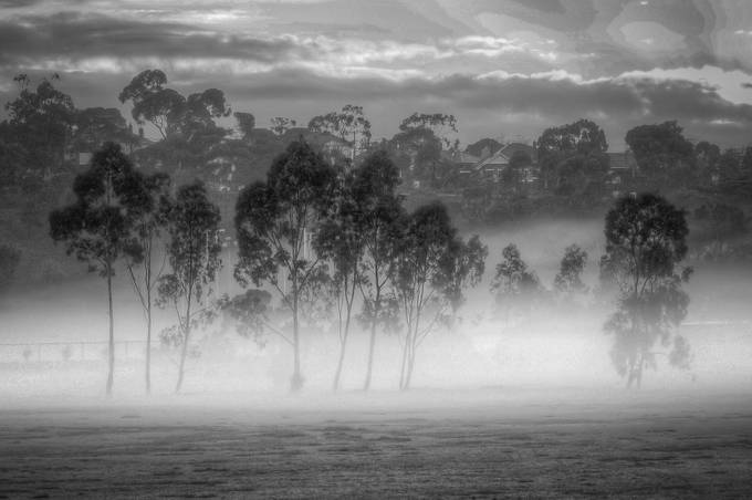 Eucalypts In The Mist by Ellen_O - Tree Silhouettes Photo Contest