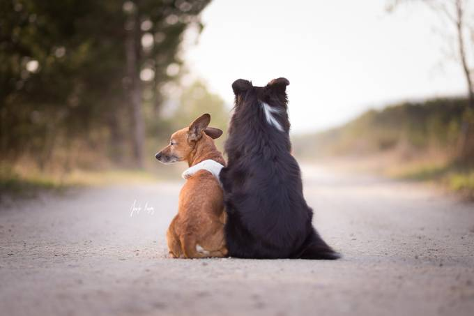 Best Friends by hadissima - Opposites Photo Contest