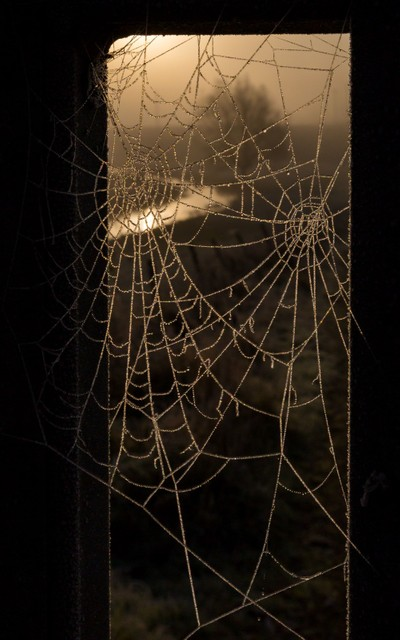 Frost melting on two cobwebs, reflecting the warm glowing colors of the sunrise, with natural border through a window
