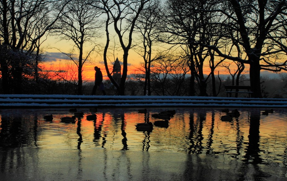Taken at dusk in the winter the ducks and Seagulls squable for the night spot as a Hospital worke...