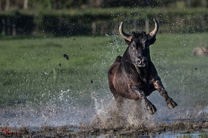 _ACT8048 by robheath - Animals And Water Photo Contest