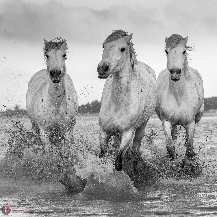 _ACT8732 by robheath - Get Wet Photo Contest