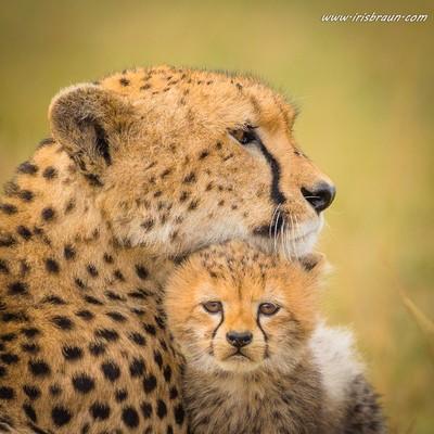 Mother Love II