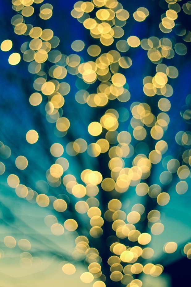 Golden Tree by julianlynchphotographer - Night And Bokeh Photo Contest