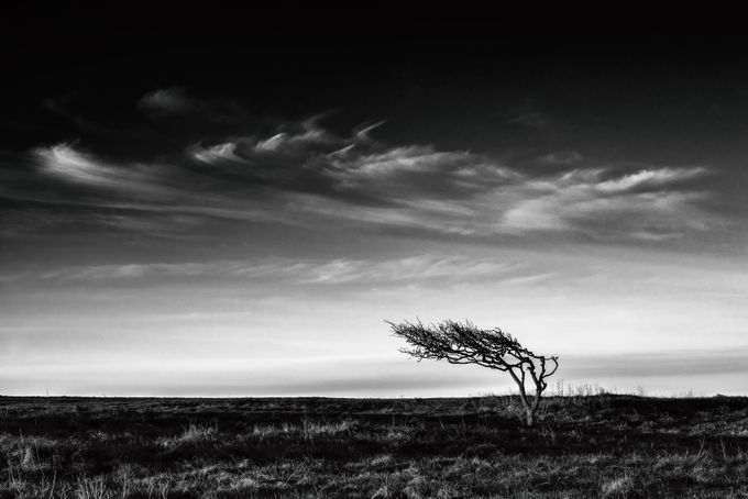 Loner by kasparsciematnieks - A Lonely Tree Photo Contest