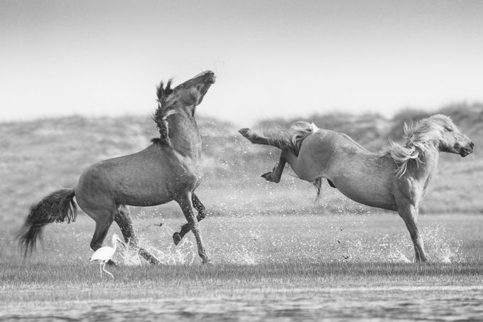 Fast and Furious by sandrabassendowski - Animals In Black And White Photo Contest