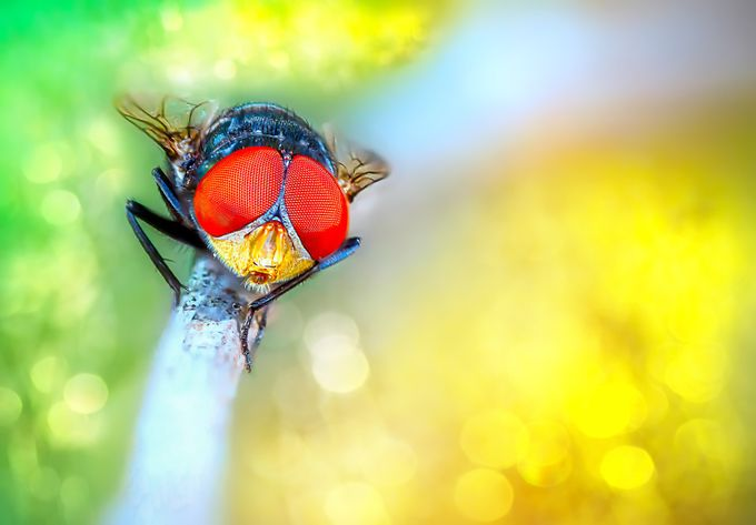 Big Eye by TienSangKok - Small Things In Nature Photo Contest