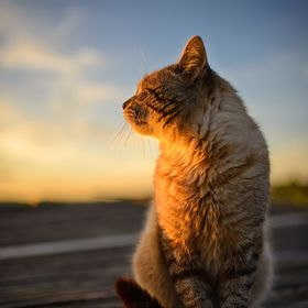 Cat enjoying sunset