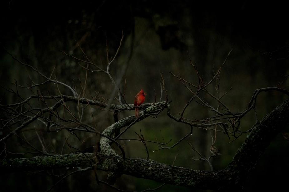 rainy bird
