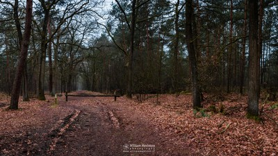Panorama - Forest Path