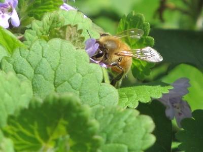 MR honey Beee