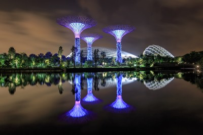 Supertrees @ Gardens By The Bay Sinagpore