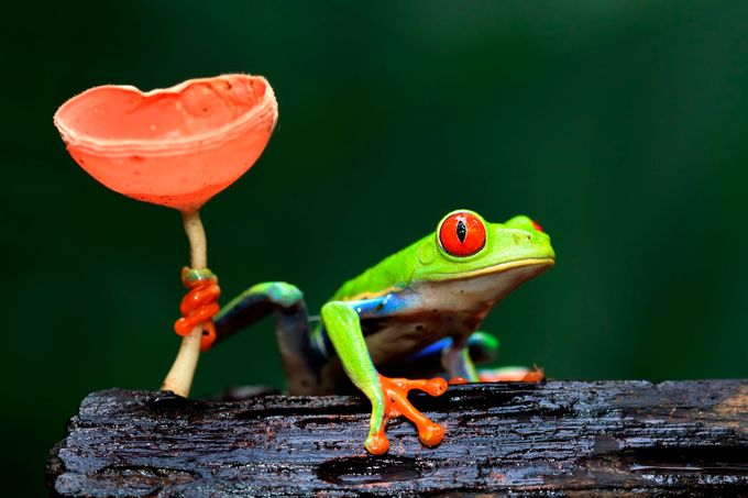 The Frog Prince by meganlorenz - Mushrooms Photo Contest
