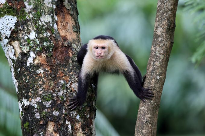 Monkeying Around by meganlorenz - Monkeys And Apes Photo Contest
