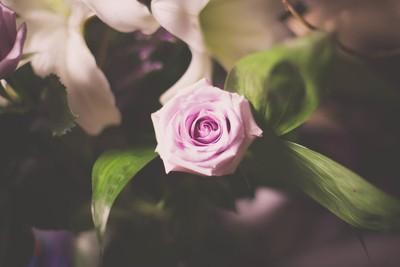 Papa's Last Rose