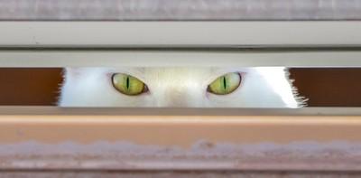 sasha peeking