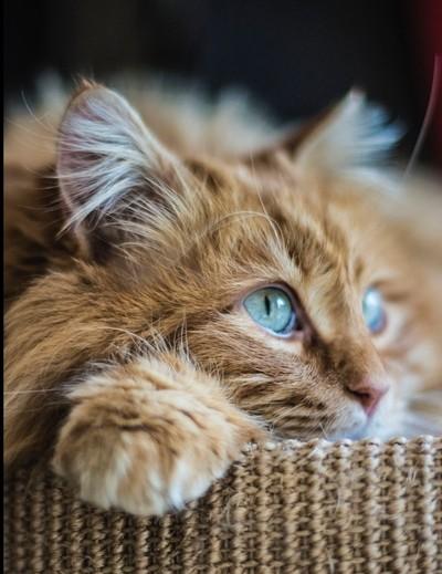 Garfield rêveur